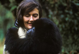 Dian Fossey Mountain Gorillas