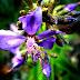 Dia Nacional da Botânica e a diversidade de plantas do Brasil