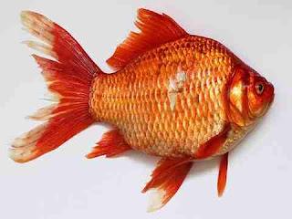 السمك في المنام بالتفصيل