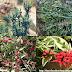 Thuốc giấu - Pantoufle - Redbird flower