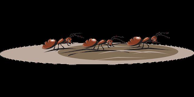 चीटियाँ लाइन में क्यों चलती हैं?   Facts about Ant in Hindi