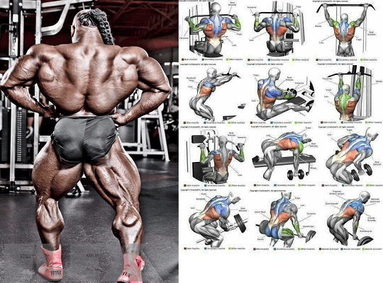 4 Best Back Workouts: To Build Your Back Muscles