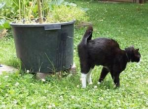 Alasan Kucing Melakukan Spraying