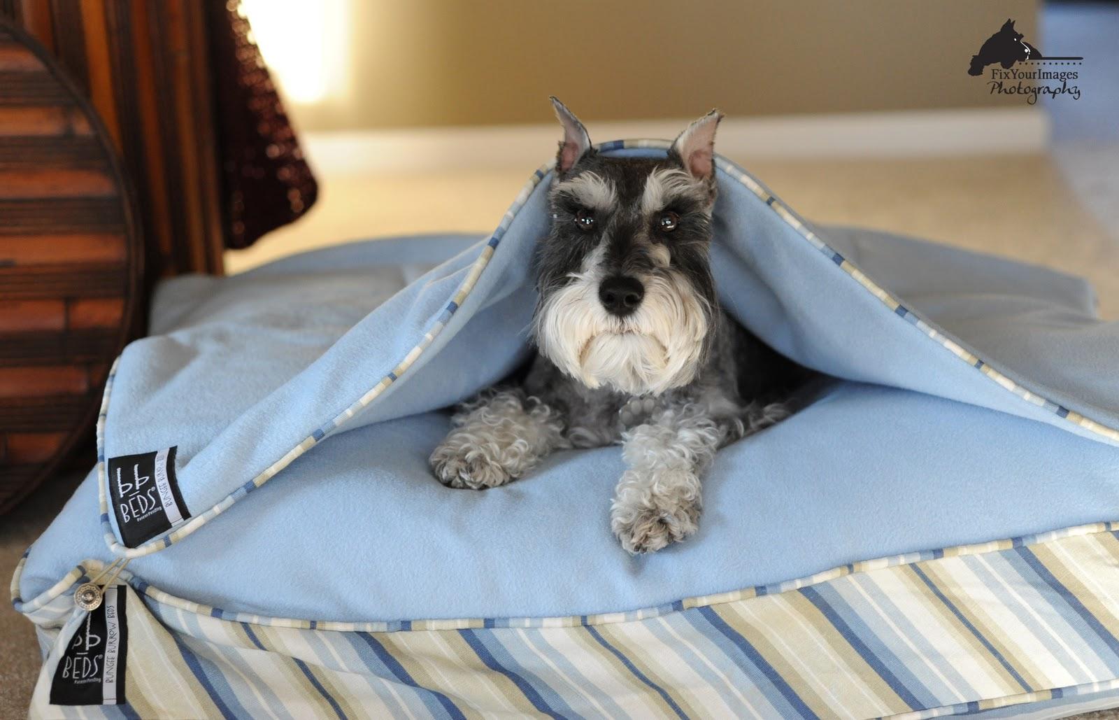Bungee Burrow Beds A Pet Bed System Kansas City Dog