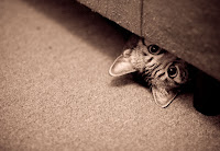 A tabby cat peeking out from under a couch  | Exclusively Cats Veterinary Hospital, Waterford, MI