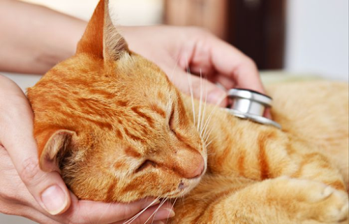 What Causes Sudden Death in Cats?