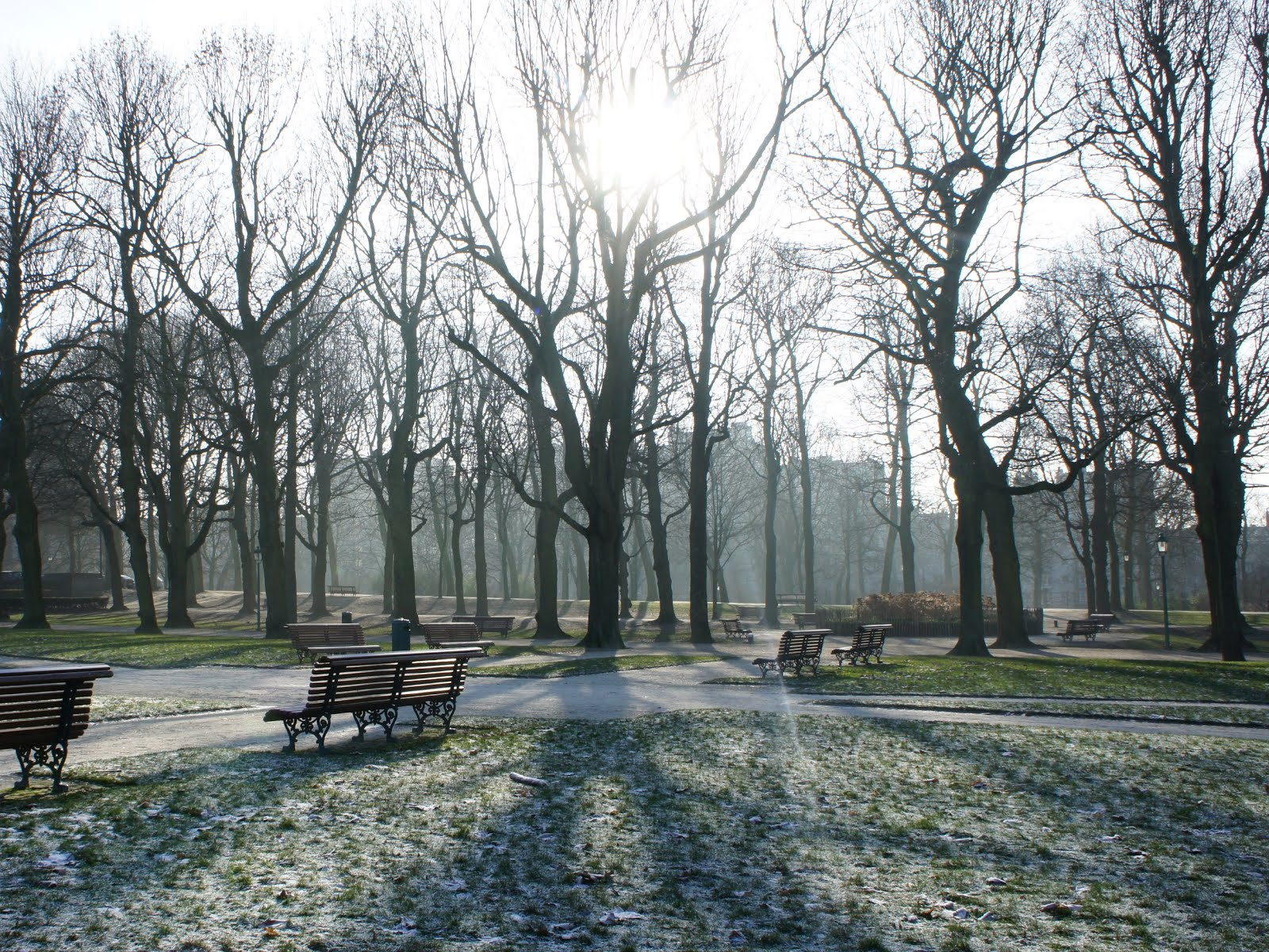 Sun shining through the trees in the Cinquantenaire Park in Brussels on a cold morning
