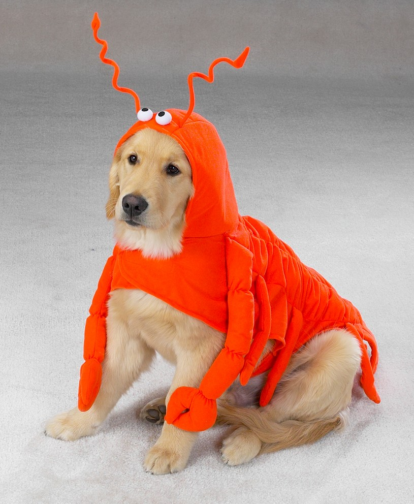 Dog Clothing, Dog Clothes, accessories: Dog Costumes, Pet ...