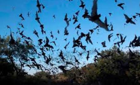 Australian Town Plagued By 200,000 Bats