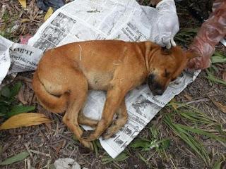 Warga Banyuasin Digigit Anjing Liar