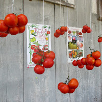 Tomato Festival Red Fire Farm Granby MA  - New England Fall Events
