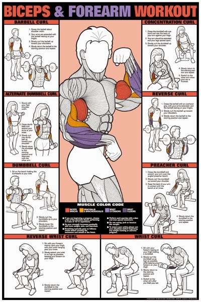 411 Awesome Workout Charts for Weight Training at Home or the Gym