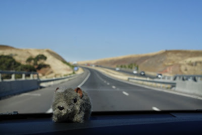 Shane Wombat in the car near Bacchus Marsh