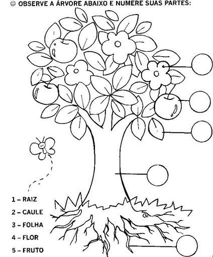 Portal Do Professor As Partes Das Plantas