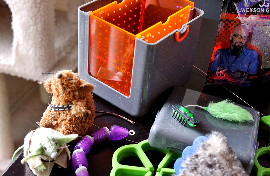 The Catnip Vault- Discover #JacksonGalaxyCatPlay by Petmate toys and enrichment tools at PetSmart and unleash your cat's inner Mojito! Foster a cat's natural instincts to hunt, catch, and kill with these colorful and engaging cat toys! #Sponsored