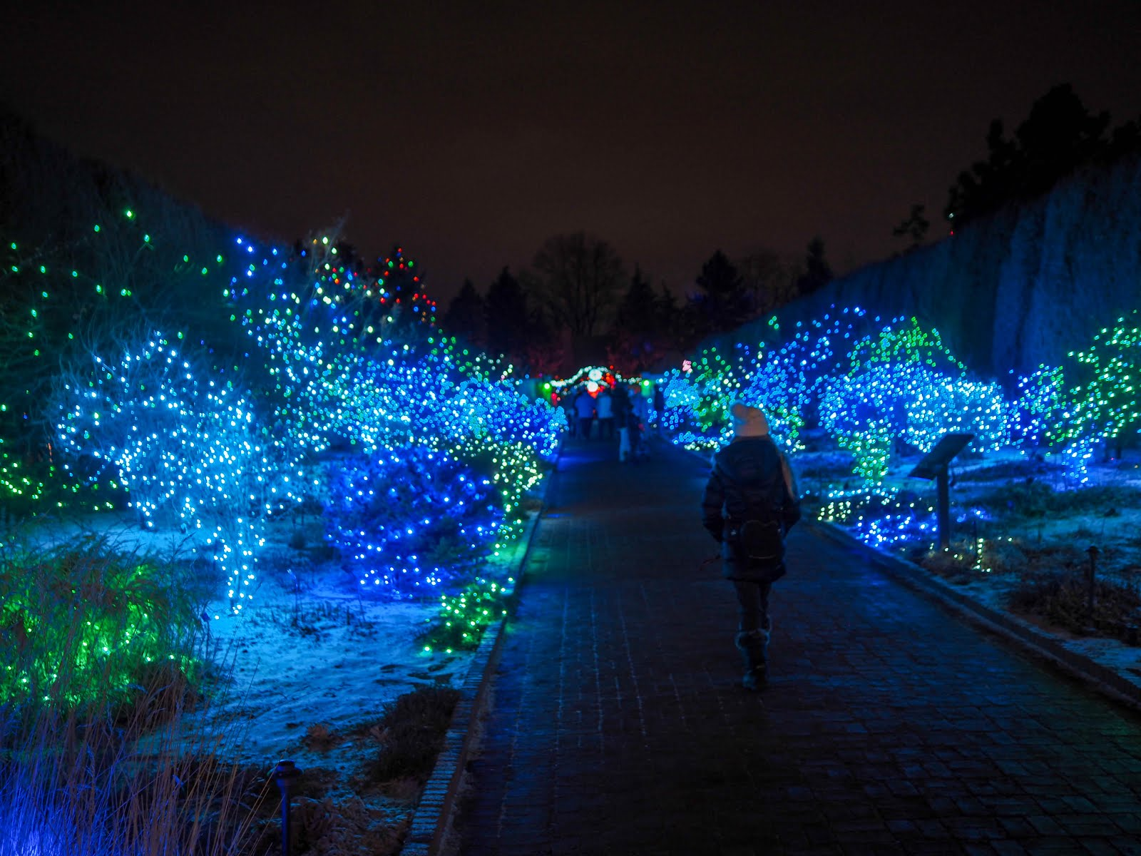 Blossoms of Light at Denver Botanic Gardens