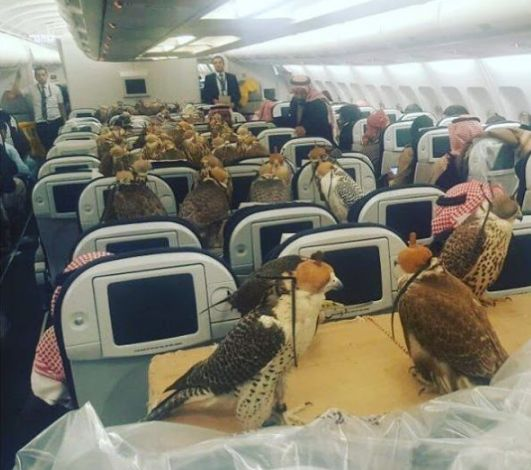 LOL! Rich Saudi Prince Buys 80 Flight Tickets For His Hawks