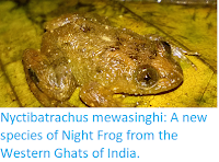 http://sciencythoughts.blogspot.co.uk/2018/03/nyctibatrachus-mewasinghi-new-species.html