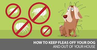 Productos químicos eficaces para matar las garrapatas y las pulgas disponibles