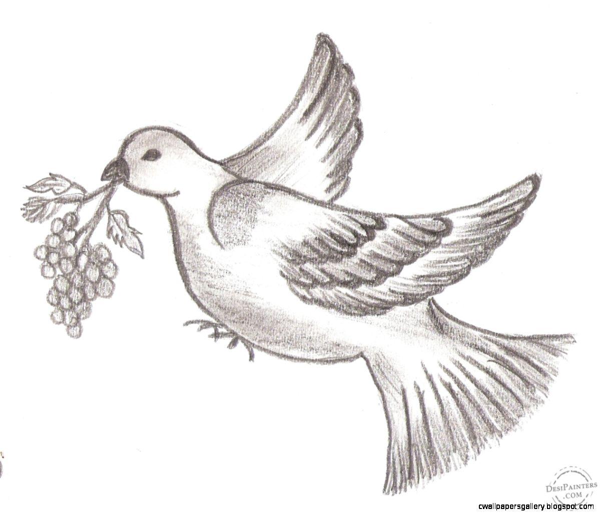 Bird drawings in pencil wallpapers gallery