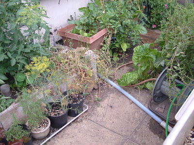 A pipe across a patio, surrounded by potted plants
