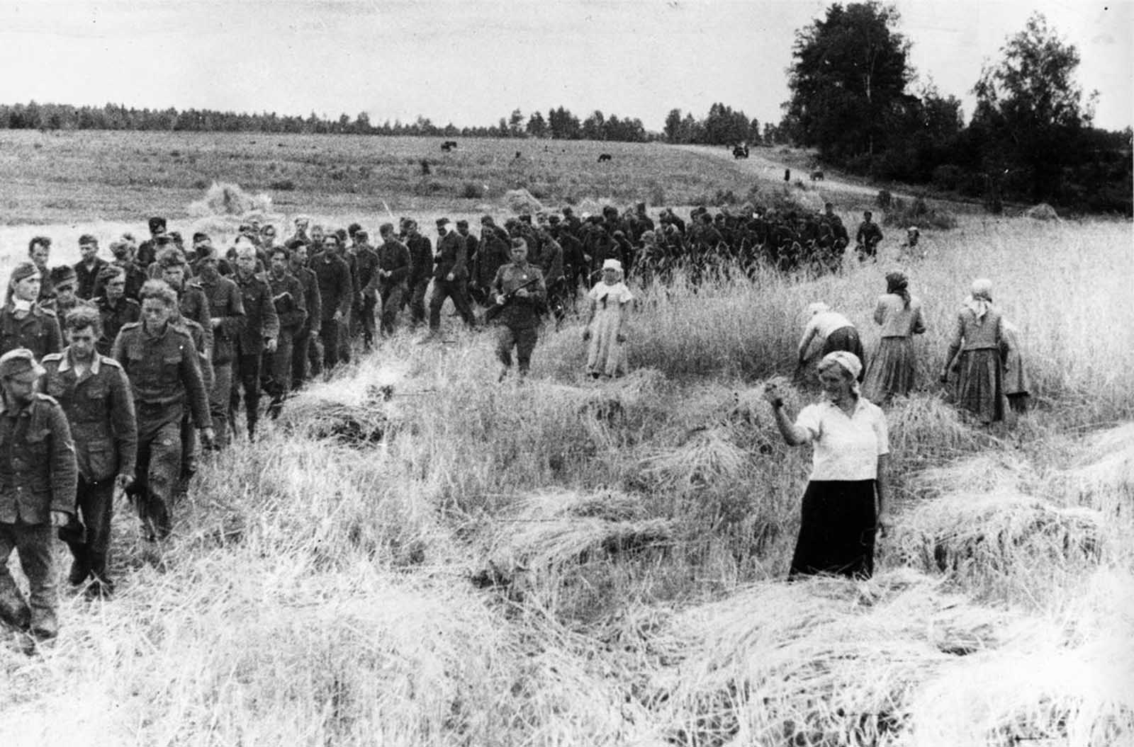 A Soviet woman, harvesting a field torn by shells only a short time ago, shakes her fist at German prisoners of war as they march eastward under Soviet guard in the U.S.S.R., on February 14, 1944.
