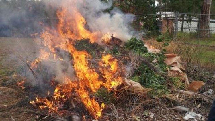Liệu bạn có bị phê thuốc nếu ở gần một cánh đồng cần sa đang cháy không