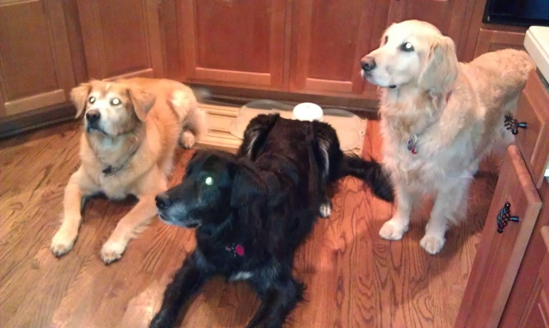 A family of rescues