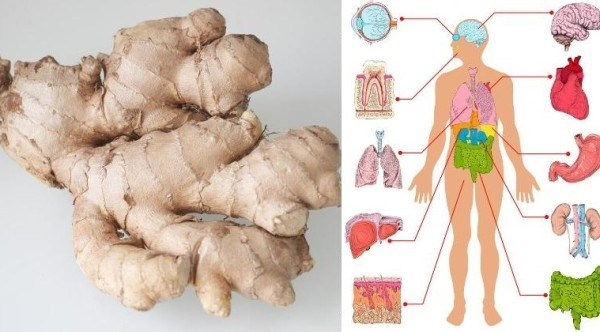 eat-ginger-every-day-amazing-ginger-health-benefits