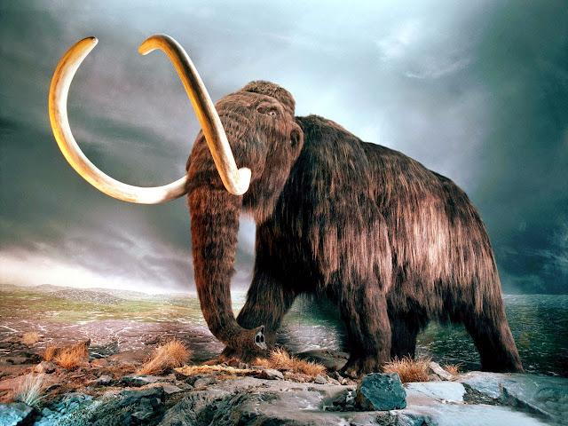 Έρχεται η «νεκρανάσταση» του μαμούθ;