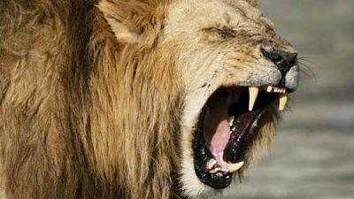 Rhino Poacher fue asesinado por un elefante y devorado por leones