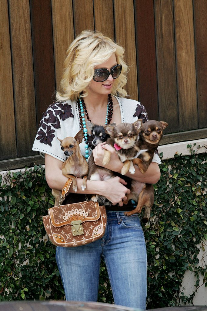 Zarah's Tail Swing: Dogs and Celebrity Owners