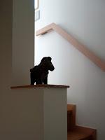 旗竿地に建つ木造3階建て住宅:深沢の家,階段 小形 徹 * 小形 祐美子プラス プロスペクトコッテージ 一級建築士事務所の設計