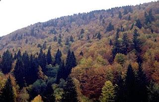 Karma Ormanlar Nerede