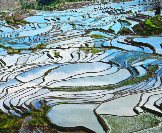 Panorama sawah di Yunyang
