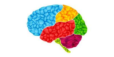 Diet Kalori Bisa Bikin Otak Awet Muda
