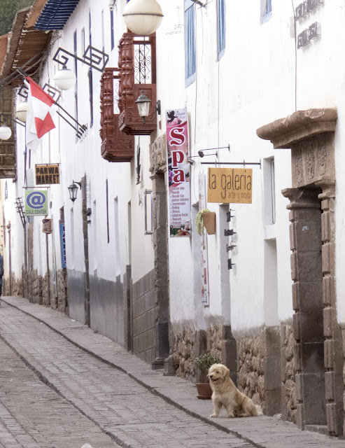 Things you'll see in 3-days in Cusco: Dog on an empty street with white-washed buildings