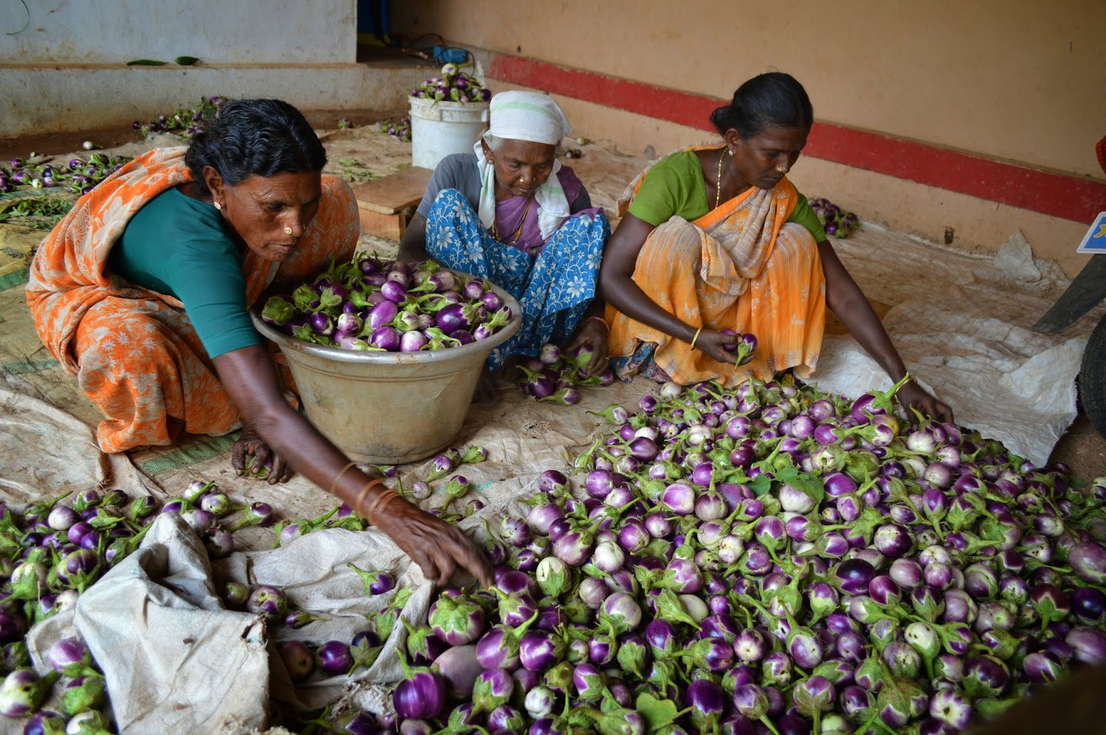 Vegetable cultivation is the main feature of the Thottiyapatty garden land area-OFI/SG- SEVAI Project.