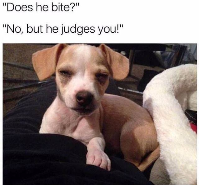 Does he bite? No, but he judges you.