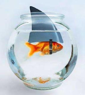 to pinterest labels funny aquarium funny fish aquarium funny fish
