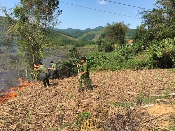 Quảng Ngãi: Mía cháy gây thiệt hại hàng trăm triệu