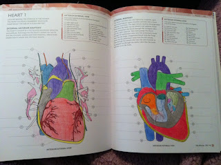 Wilcox`s surgical anatomy of the heart