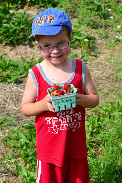 Strawberry picking, picking strawberries, field trips for kids, field trip ideas, Nate