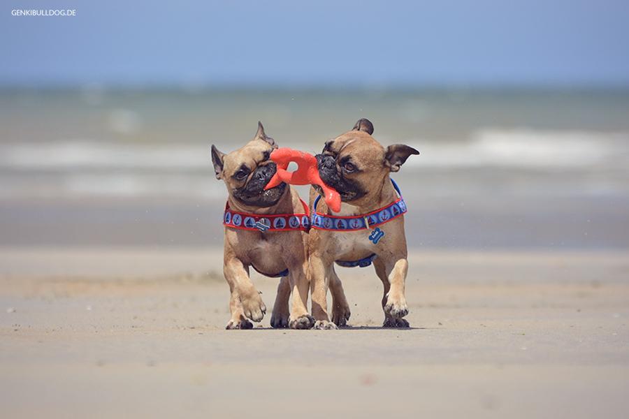 Saint-Aubin-sur-Mer Urlaub in Frankreich mit Hund