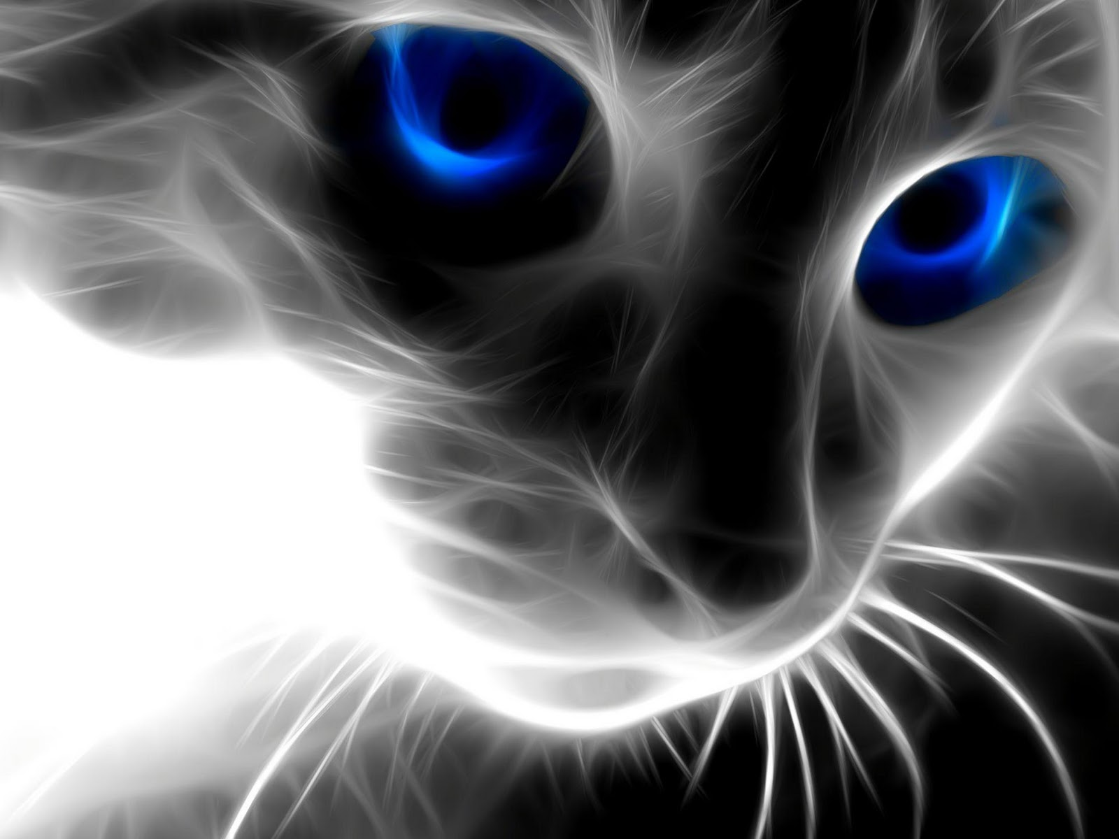 Awesome wallpaper - Cool backgrounds of cats ...