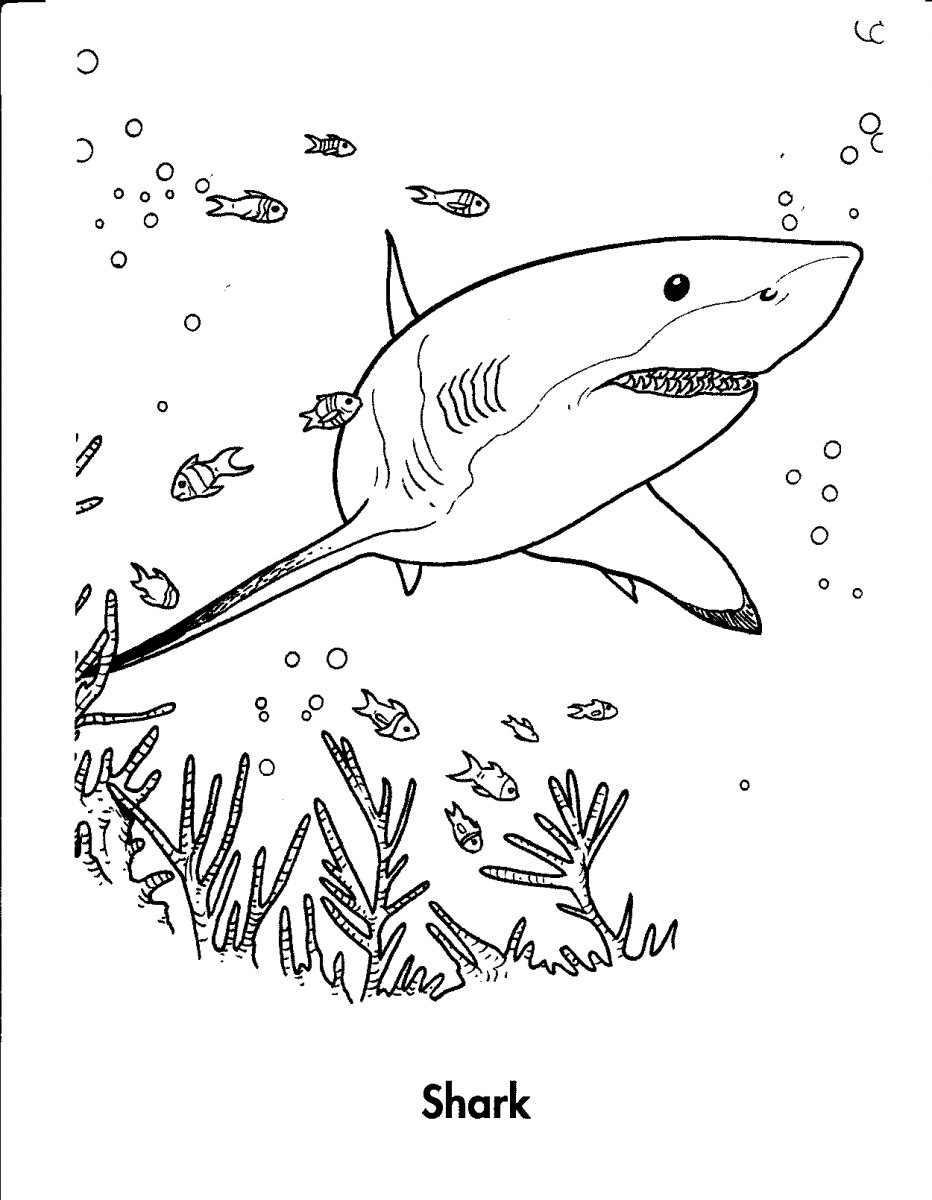 imagenes de animales marinos para colorear
