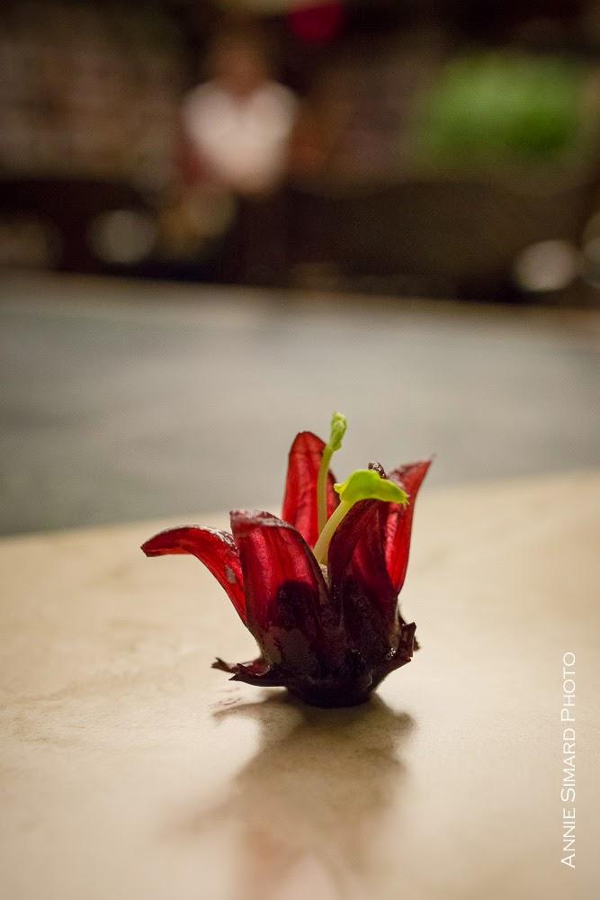 hibiscus à la mousse de chèvre et à l'huile de romarin | 180 degrés