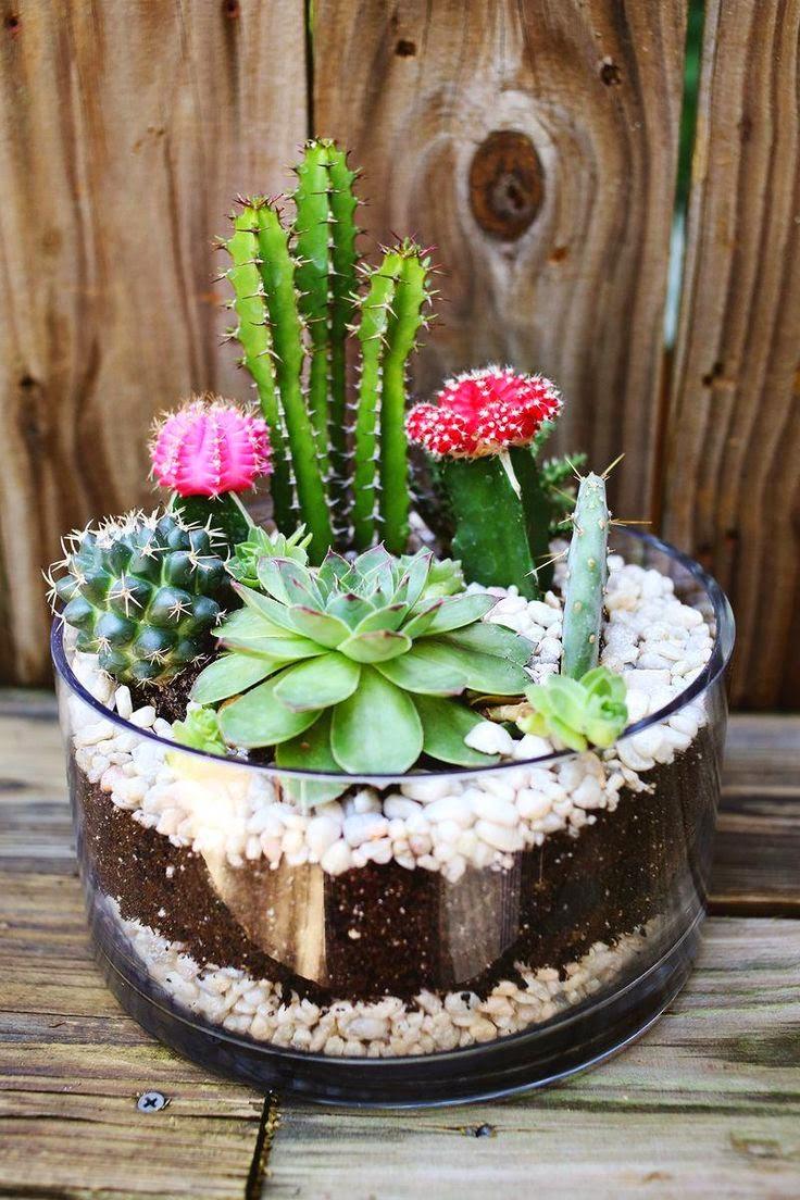 cómo crear tu mini jardín paso a paso