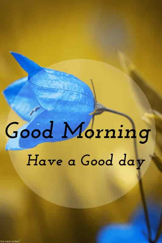 good morning pictures for whatsapp with blue flower
