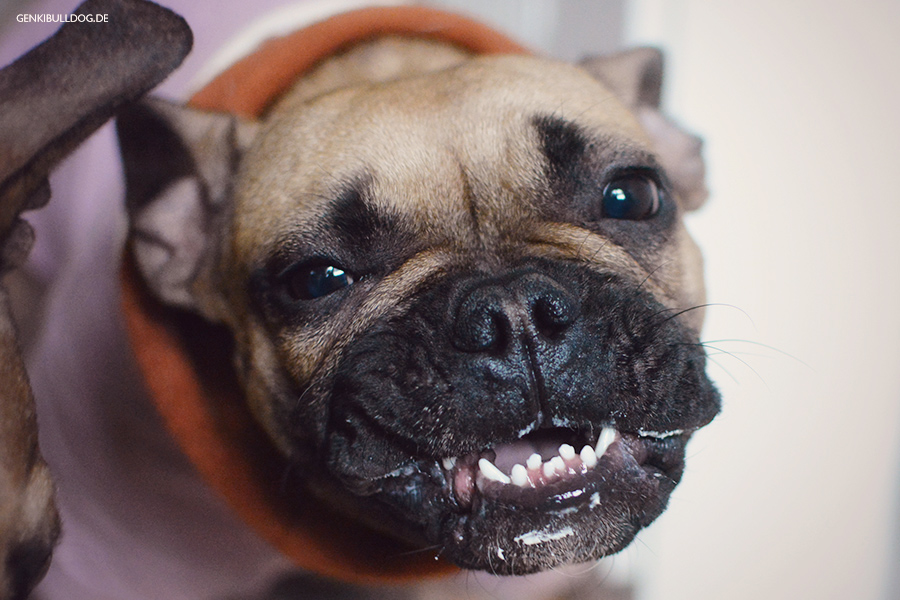 Dorayaki für Hunde für Hunde backen Rezept Hundekuchen Hundeleckerchen